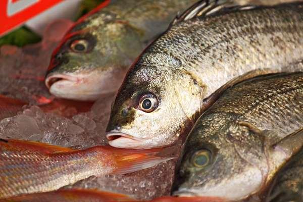 Przetwórstwo rybne praca Gryfice